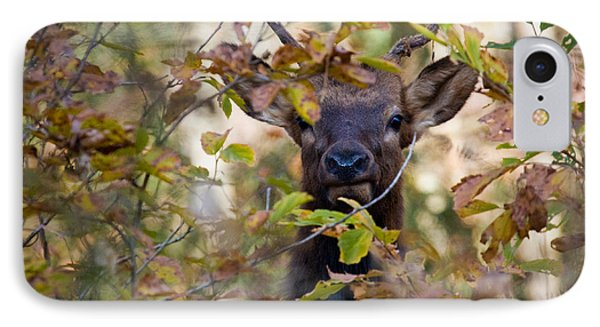 IPhone Case featuring the photograph Yearling Elk Peeking Through Brush by Michael Dougherty