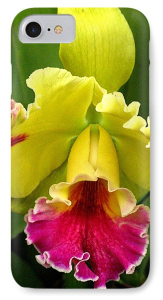 IPhone Case featuring the photograph Yellow And Pink Cattleya Orchid by Alfred Ng