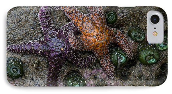 Orange And Purple Starfish II IPhone Case