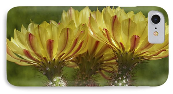 Yellow And Red Cactus Flowers IPhone Case