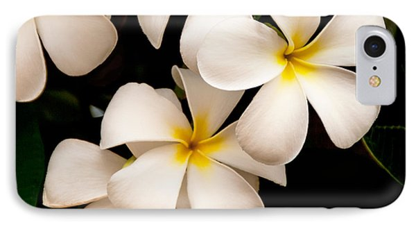 Yellow And White Plumeria Phone Case by Brian Harig