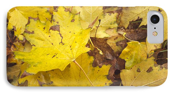 Yellow Autumn Leaves IPhone Case by Thubakabra