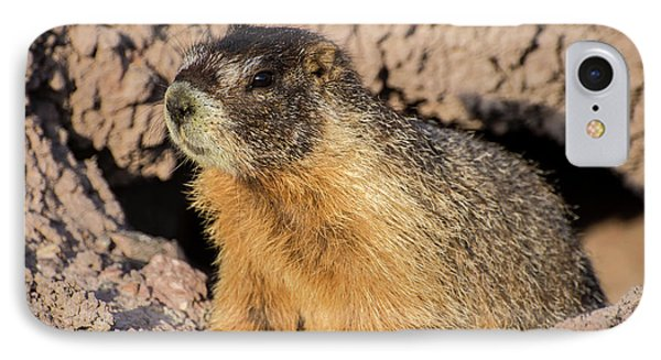 Yellow-bellied Marmot - Capitol Reef National Park IPhone 7 Case