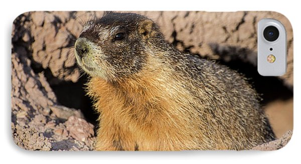 Yellow-bellied Marmot - Capitol Reef National Park IPhone Case by Gary Whitton
