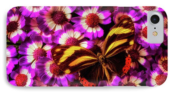 Yellow Black Butterfly On Pericallis IPhone Case by Garry Gay