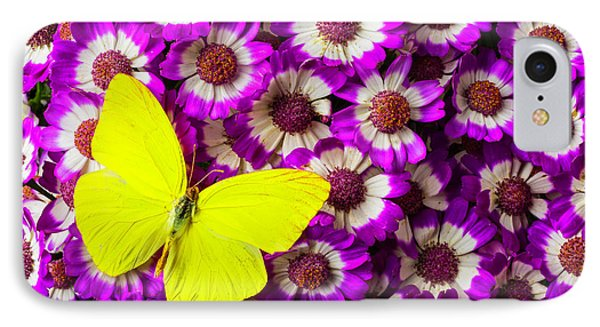 Yellow Butterfly On Pericallis Flowers IPhone Case by Garry Gay