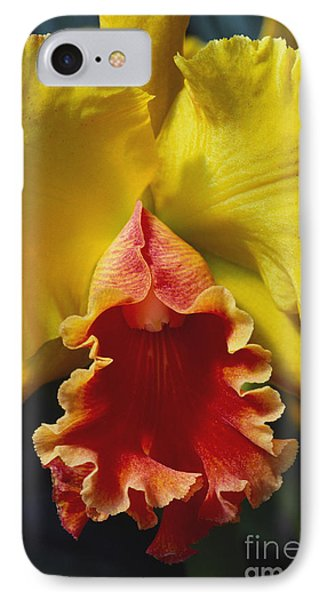 Yellow Cattleya Orchid Phone Case by Greg Vaughn - Printscapes