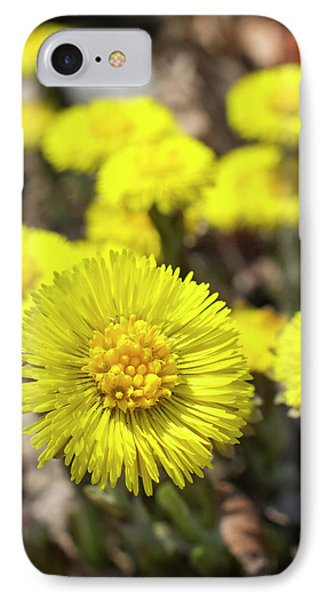 IPhone 7 Case featuring the photograph Yellow Coltsfoot Flowers by Christina Rollo