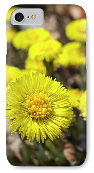 IPhone Case featuring the photograph Yellow Coltsfoot Flowers by Christina Rollo