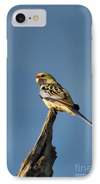 IPhone Case featuring the photograph Yellow Crimson Rosella by Douglas Barnard