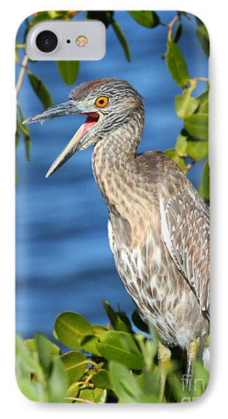 Yellow-crowned Night Heron IPhone Case by Jennifer Zelik