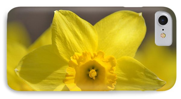 Yellow Daffodil Flower IPhone Case