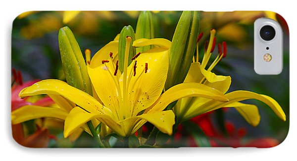 Yellow Day Lily 20120614_55a IPhone Case by Tina Hopkins