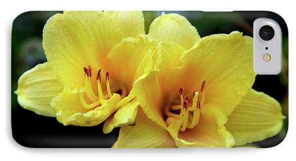 Yellow Daylilly 0204 H_2 IPhone Case