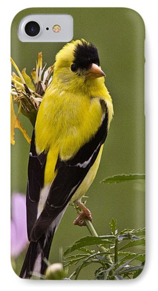 Yellow Finch - Color Impact - Artist Cris Hayes IPhone Case