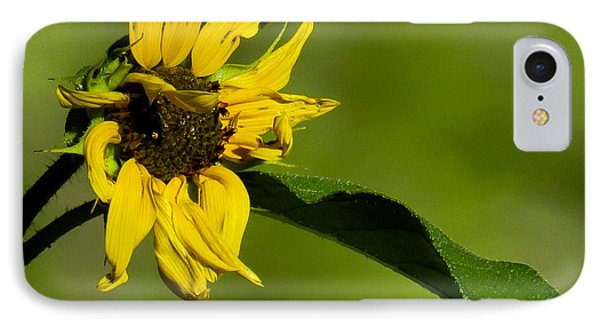 Yellow Flower 1 IPhone Case