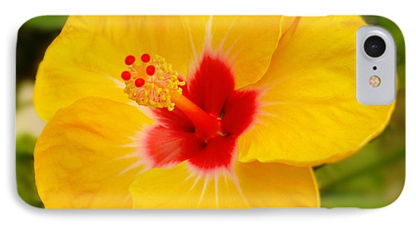 Yellow Hibiscus IPhone Case by Mike McGlothlen