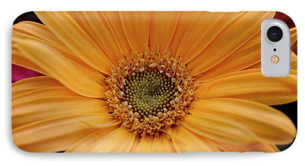 Yellow Gerbera Daisy IPhone Case by Ivete Basso Photography