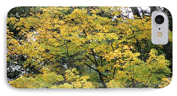 IPhone Case featuring the photograph Yellow Gold Fall Tree by Ellen Barron O'Reilly