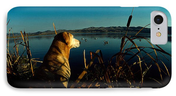 Yellow Labrador Retriever IPhone Case by Panoramic Images