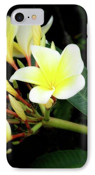 Yellow Plumeria IPhone Case by Ann Powell