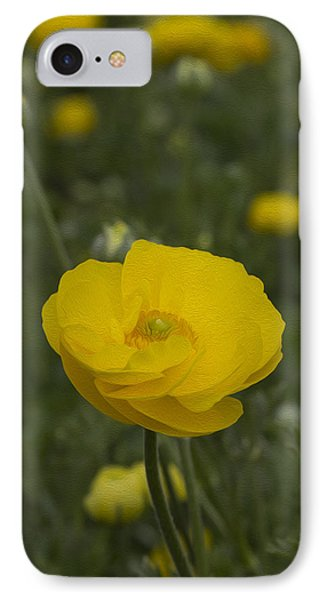 Yellow Ranunculus Flowers IPhone Case