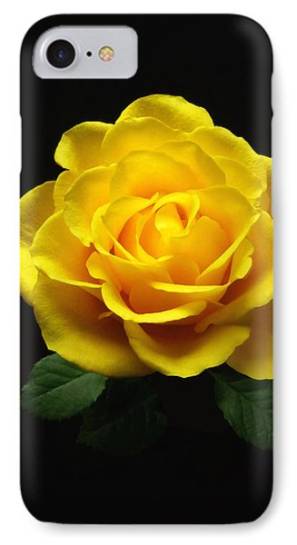 Yellow Rose 6 IPhone Case