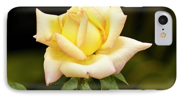 IPhone Case featuring the photograph Yellow Rose by Bill Barber