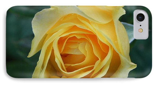 Yellow Rose Phone Case by John Parry