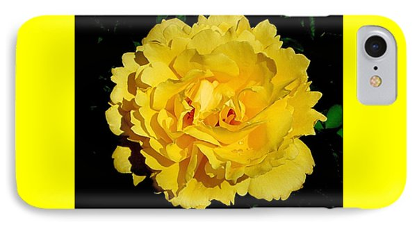 Yellow Rose Kissed By The Rain IPhone Case