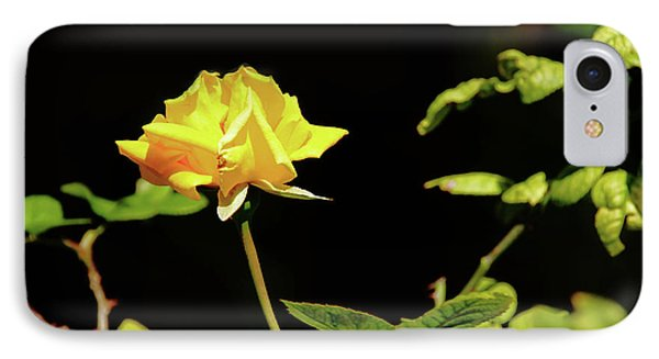 Yellow Rose  IPhone Case by Mike Murdock