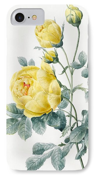 Yellow Roses IPhone Case by Louise D'Orleans