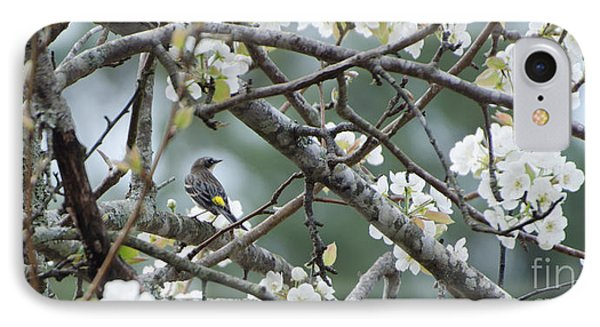 Yellow-rumped Warbler In Pear Tree IPhone Case by Donna Brown