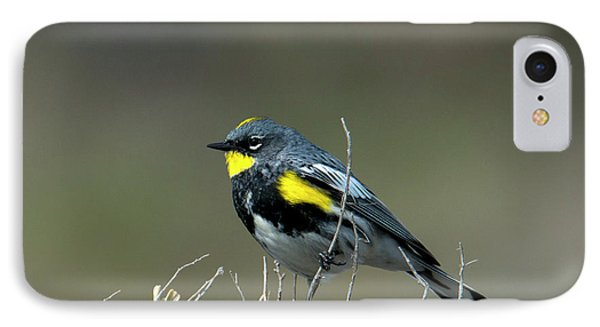 IPhone Case featuring the photograph Yellow-rumped Warbler by Mike Dawson