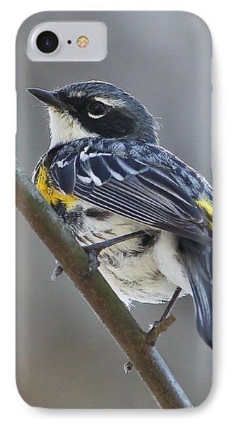 Yellow-rumped Warbler Portrait IPhone Case