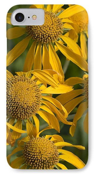 Yellow Sneezeweed, Helenium Autumnale IPhone Case