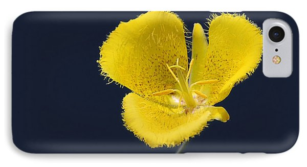 Yellow Star Tulip - Calochortus Monophyllus IPhone Case
