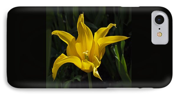 Yellow Star Tulip IPhone Case