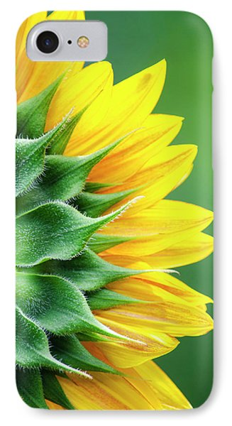 Yellow Sunflower IPhone Case by Christina Rollo