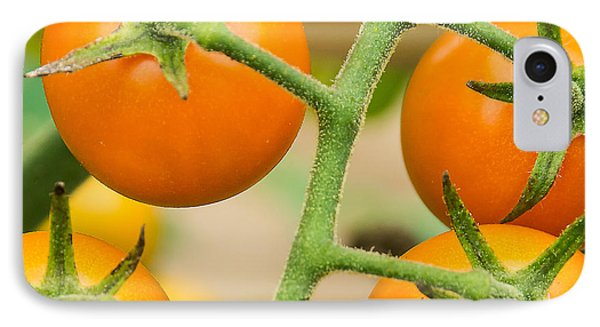 Yellow Tomatoes IPhone Case by Paul Miller