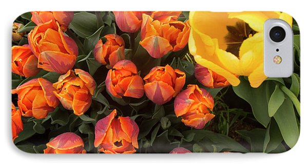 Yellow Tulip Supervisor IPhone Case by Jean Noren