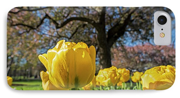 Yellow Tulips In The Public Garden Boston Ma IPhone Case by Toby McGuire