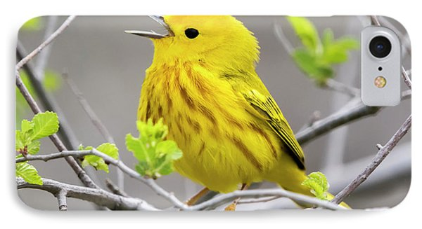 Yellow Warbler  IPhone 7 Case