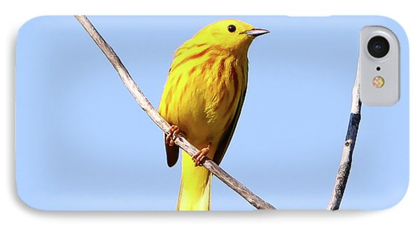 Yellow Warbler #1 Phone Case by Marle Nopardi