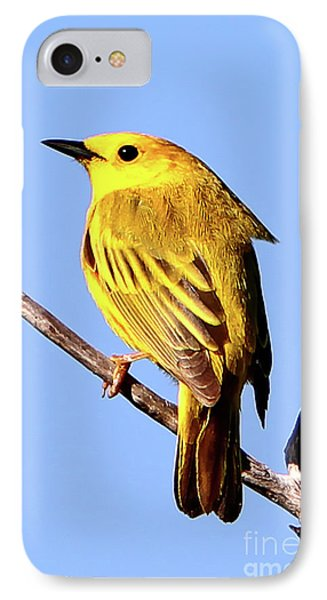 Yellow Warbler #2 Phone Case by Marle Nopardi