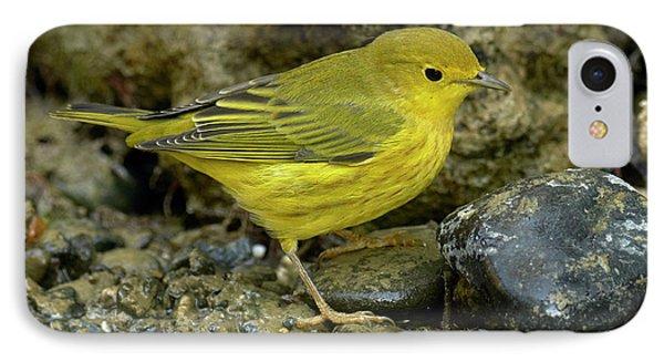 Yellow Warbler Phone Case by Doug Herr