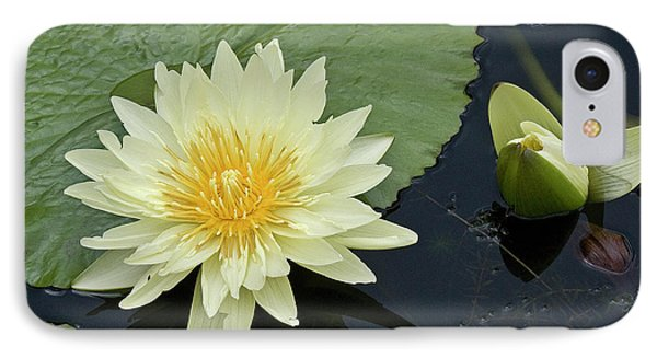 Yellow Water Lily With Bud Nymphaea Phone Case by Heiko Koehrer-Wagner