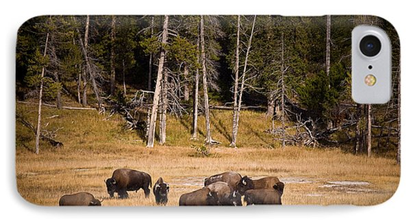 Yellowstone Bison IPhone Case by Steve Gadomski