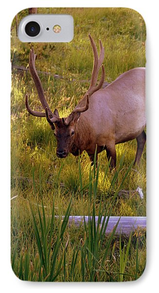 Yellowstone Bull Phone Case by Marty Koch