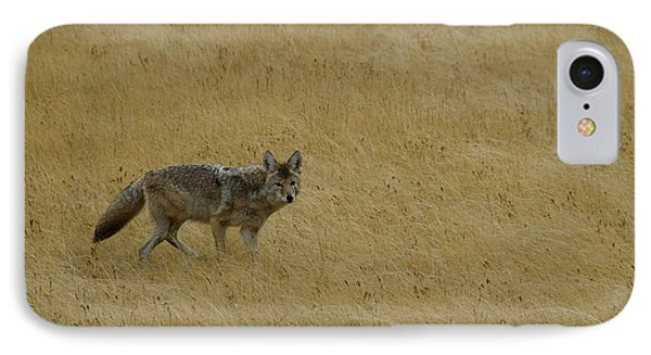 IPhone Case featuring the photograph Yellowstone Coyote by Sue Smith